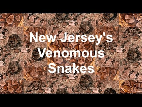 HUGE Reptile Expo // Bull Terrier Meet Up // (2 VIDEOS IN 1) from YouTube · Duration:  13 minutes 19 seconds