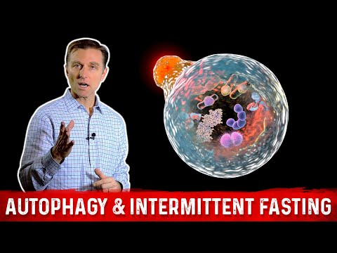 autophagy-&-intermittent-fasting:-activate-garbage-recycling-and-cellular-remodeling