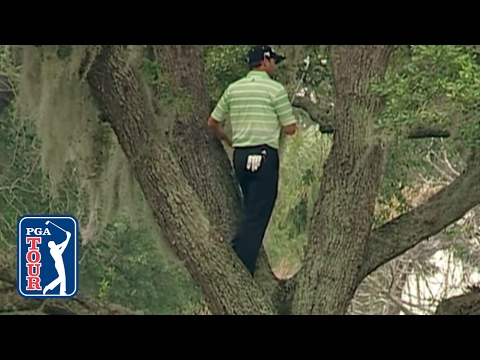 Sergio Garcia climbs a tree to hit one-handed second shot