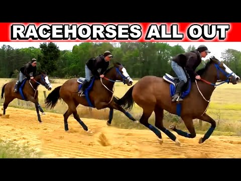 Race Horses Work Out. Training Thoroughbreds. Kentucky Derby