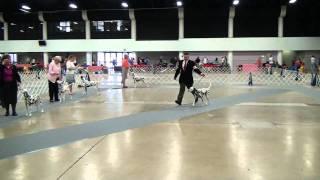 West Palm Beach, Fl Dog Show (3/12/11): Dalmatian Best Of Breed