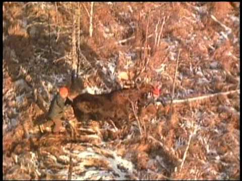 Where Men Walk with Moose