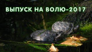 Выпуск черепах 2017