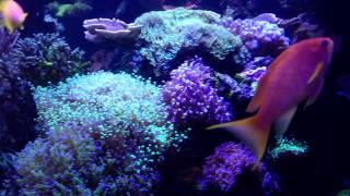 "Mare Daniel. Sein ""kleines"" Aquarium mit 3"