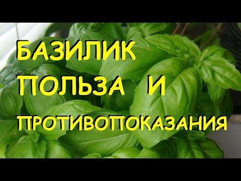 Базилик. Польза и вред. | Benefits Of Basil (in Russian Language)
