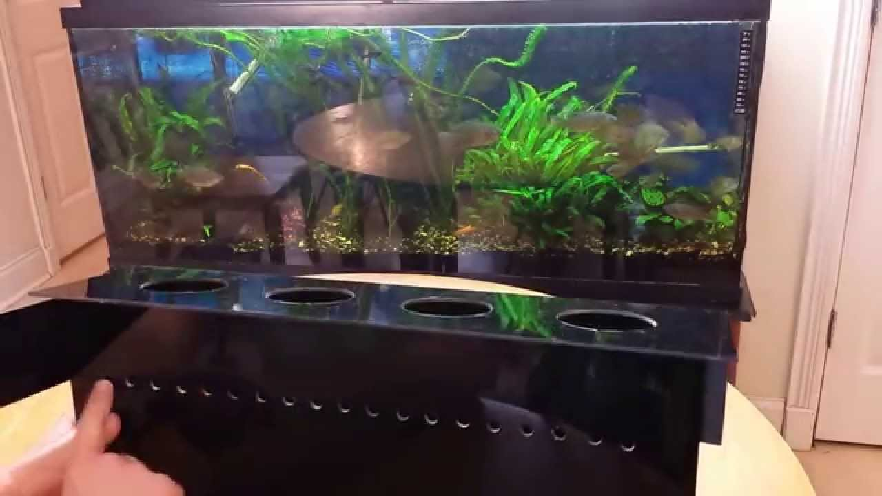 Indoor Aquaponics System  How To Grow Vegetables In Your Aquarium The Easy  Way   YouTube