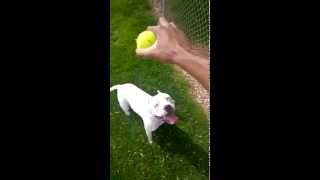 Dog Fetch Fail