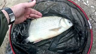 Ловля лещей и язей на фидер. Рыбалка в октябре на Иртыше.
