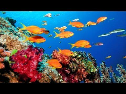 great-barrier-reef---la-grande-barrière-de-corail---wielka-rafa-koralowa---australia