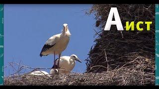 Развивающий алфавит для детей. Животные на букву А - Мультипедия животных