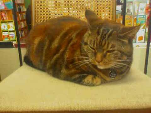 Pictures of cat in bookstore in Berkeley California
