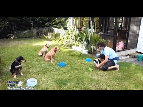 How To Train A Dog - Become The Pack Leader