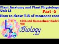 How to draw T.S of monocot root,Step by step, Plant Anatomy,10th std Samacheer Kalvi TN, Biology