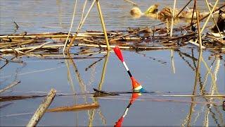 МУТНАЯ ВОДА КИШИТ РЫБОЙ Карась на поплавок Рыбалка на удочку Поплавок весна 2021