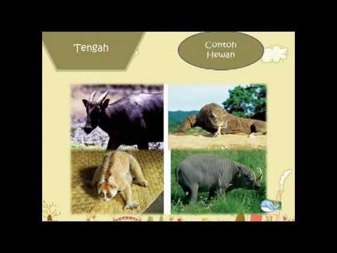 persebaran fauna di Indonesia media pembelajaran kelompok 7