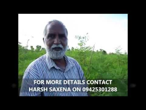 Visit to 100% Organic Moringa or Drumstick leaf cultivation