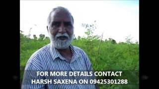 Visit to 100% Organic Moringa or Drumstick leaf cultivation farm of Joshiji in Bhuj,Gujrat !!