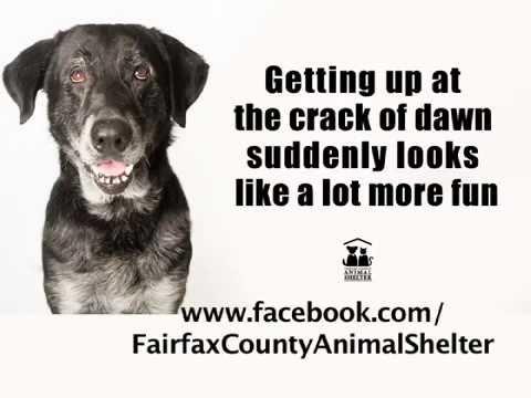 Visit the Animal Shelter for Black Fur Day Deals