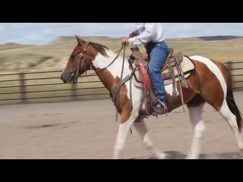 Charmin Image - 2016 Paint Gelding For Sale - Grandson Of Dash For Perks