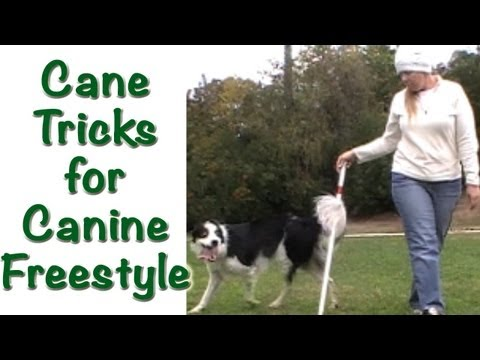 Cane Tricks for Canine Freestyle - Clicker Training