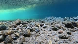 Spawning Sockeye Salmon on The Cedar River - Underwater BONUS Footage