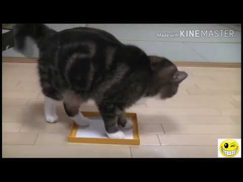 Funny cats video | Died laughing with the humor of the cat, try not to laugh (PART 1)