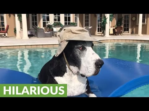 Hat-wearing Great Dane chills out in pool