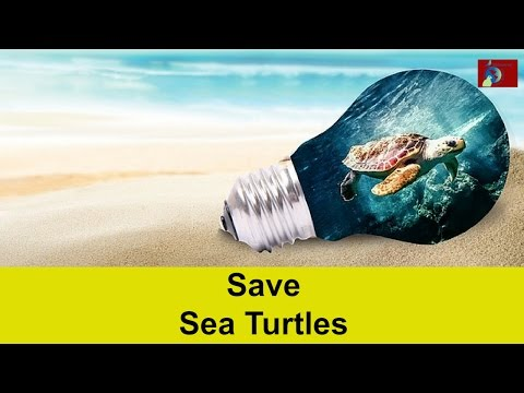 What Is Happening To Sea Turtles?