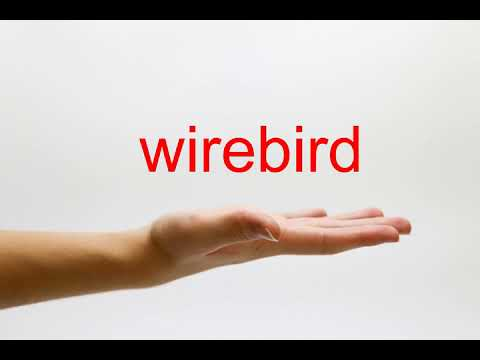 How to Pronounce wirebird - American English