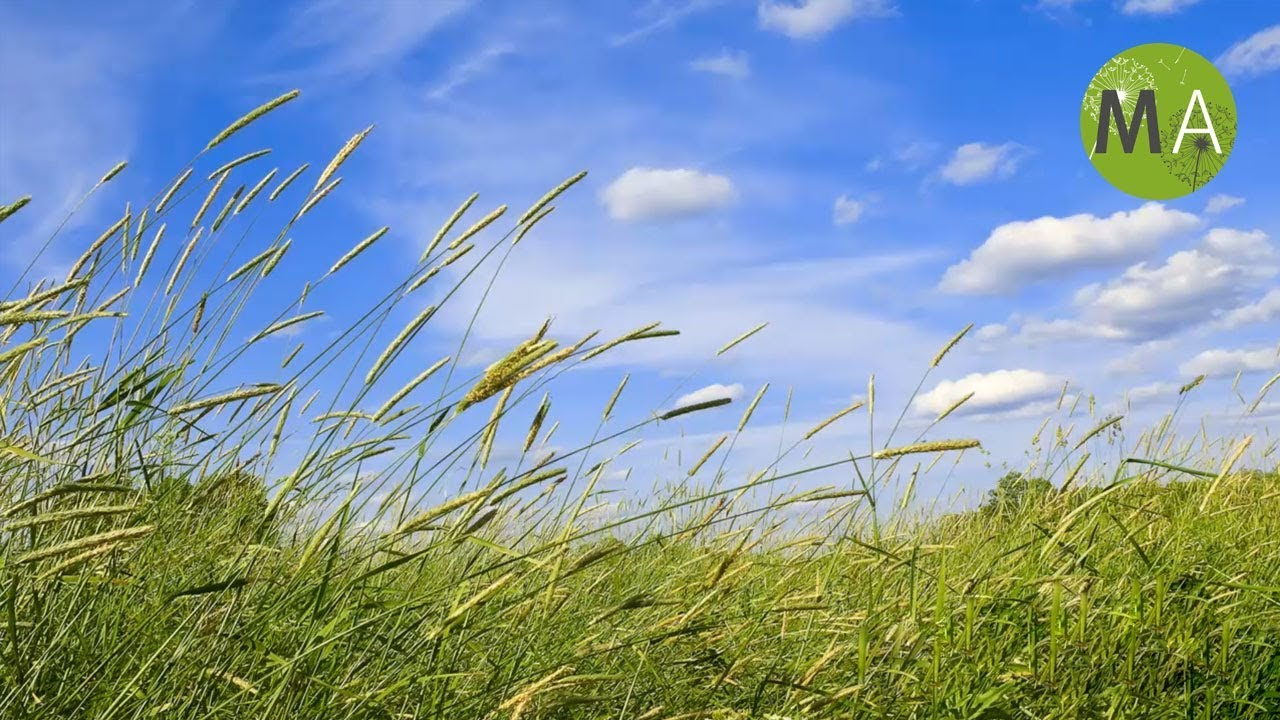 Wind Sounds - Full 60 Minute Soundscape - YouTube
