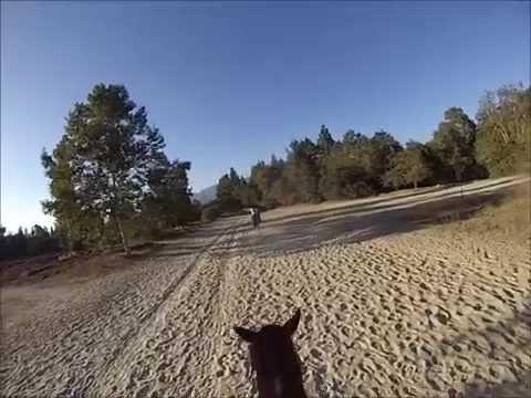 Birthday 2014 - Horse Riding @ Griffith Park
