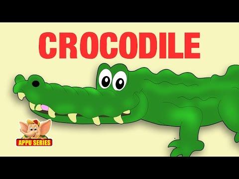 Animal Facts - Crocodile