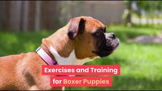Exercising You Boxer Dog Puppy  Tips to Keep Your Beloved Boxer Happy and Fit!