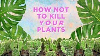 GORGEOUS TRENDY PLANTS: TROPICAL PLANTS 101