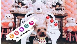 Aniversário de Cachorro! Matilde na festa