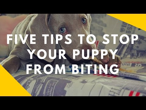 Five Tips To Stop Your Puppy From Biting You