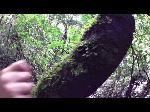 Costa Rica Monteverde Cloud Forest Guided Hike Orchids Part 3 at LeaningTraveler.com