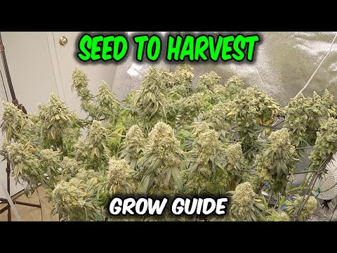 How I Grew OG Kush from SEED to HARVEST in Living Soil Complete Grow includes time lapse