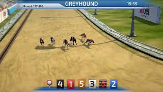Best Dog Betting Game | Greyhound Racing game 3D virtual dogs InbetGames