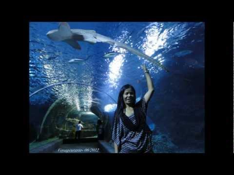Bangkok, Siam Ocean World [HD]
