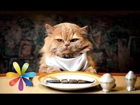 Чем и как правильно кормить кота, кормление кошек