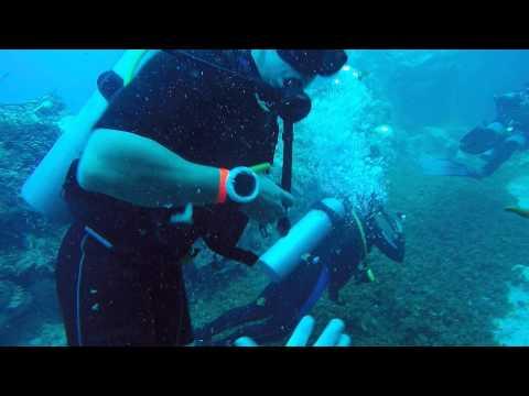 POV Diving - Palancar - Cozumel - México