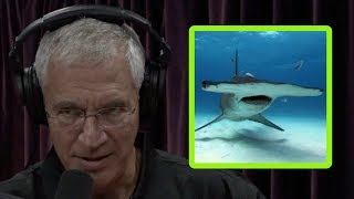 Louie Psihoyos Shares a Harrowing Tale of Swimming with Sharks