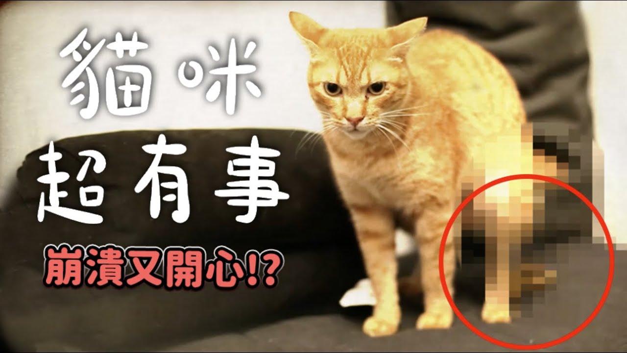 【黃阿瑪的後宮生活】貓咪超有事! 崩潰又開心!?