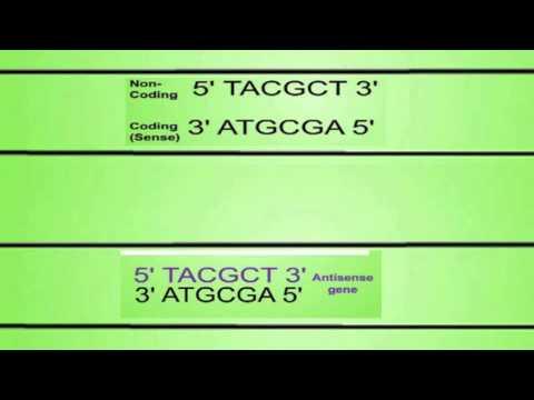 Transgenic Organisms: Flavr Savr