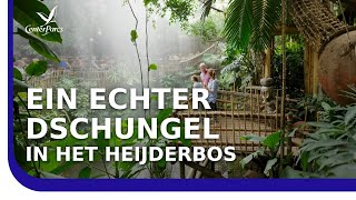 Ferienpark Center Parcs Het Heijderbos entdecken – Sommerlic…