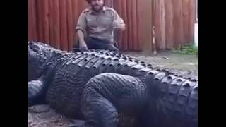 Biggest Alligator Ever Seen In The World