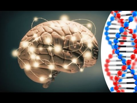 Scientists Discover Intelligence Gene Network
