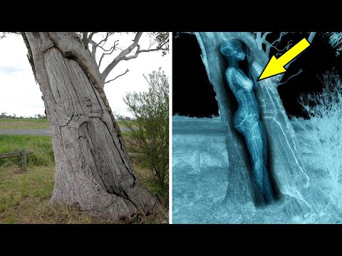 9 Strange Things Found in Unexpected Places