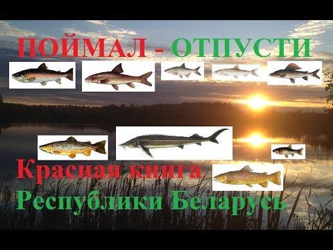 Запрет на ловлю. Рыбы которых ловить нельзя. Поймал отпусти.